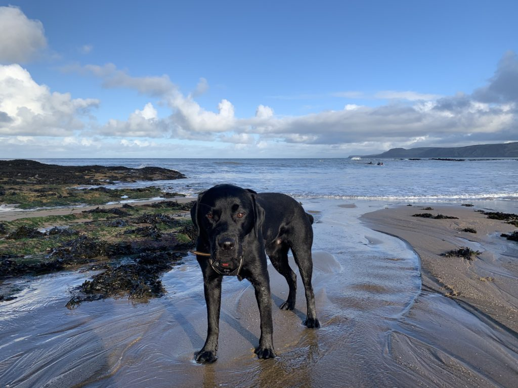 My dog on the beach in West Wales